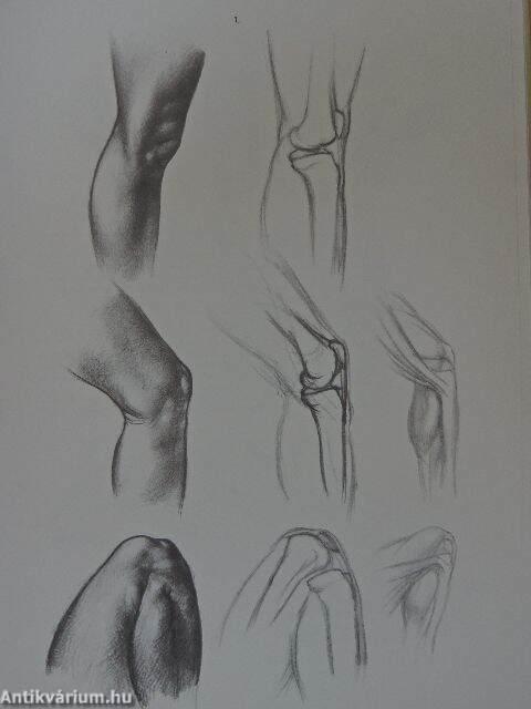 Barcsay Jenő: Anatomy for the Artist (Corvina Kiadó Kft, 1997 ...