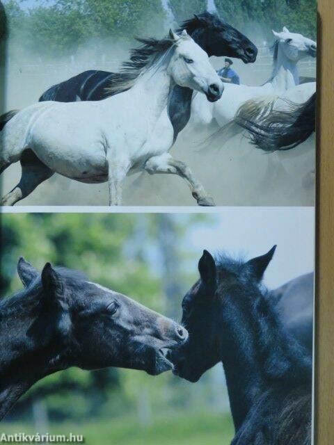 lovas randevú Ausztrália