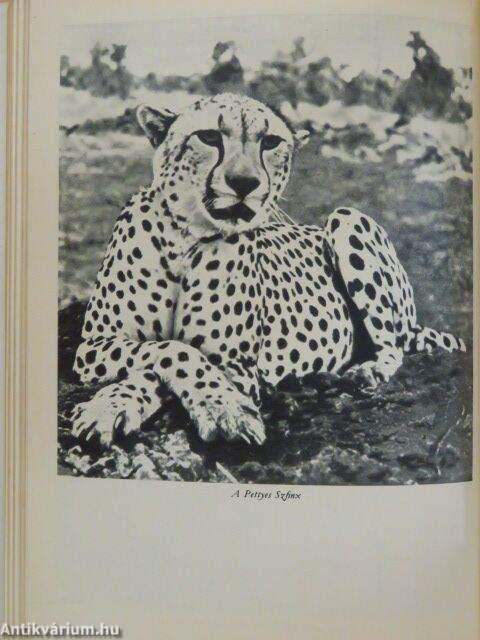 Joy Adamson: A pettyes szfinx (Gondolat Könyvkiadó, 1972) - antikvarium.hu
