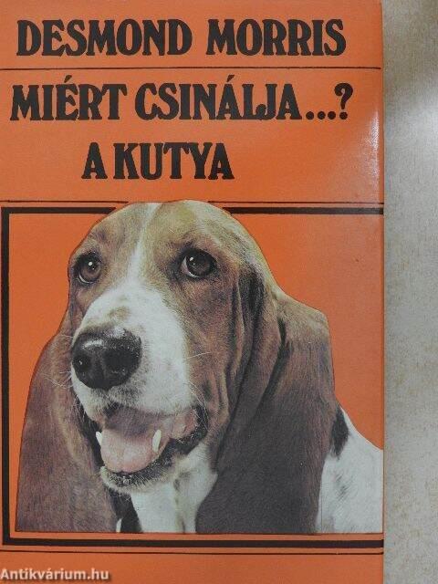 Bentlakásos tanfolyamon tanítják, hogyan kell bánni a vakvezető kutyával